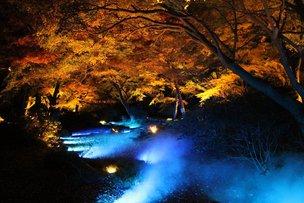 六義園紅葉ライトアップ-水香江